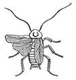 cockroach vintage vector image vector image