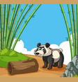 happy panda in bamboo forest vector image