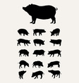 pig silhouettes vector image vector image