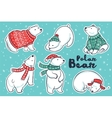 Polar Bears collection in red and green sweater vector image vector image