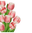 realistic tulips bouquet card design template vector image