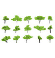 set green trees on an empty background vector image vector image