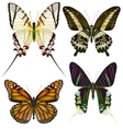 Set of isolated butterflies vector image