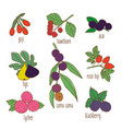colored hand drawn botanical food set vector image