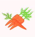 carrots with green leaves isolated on white vector image vector image