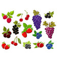 wild and garden berries isolated sketches vector image