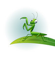 cartoon praying mantis on leaf vector image