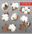 cotton plant transparent realistic set vector image vector image