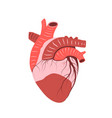 healthy heart medical anatomy flat icon design vector image