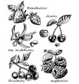 ink hand drawn sketch style berries set vector image vector image