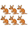 kangaroo with different emotions vector image vector image