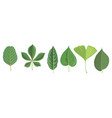 set tree leaves vector image vector image