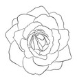 beautiful monochrome black and white rose isolated vector image vector image