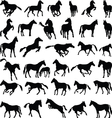 Horses various postures silhouettes vector image vector image