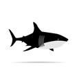 Shark Week vector image vector image