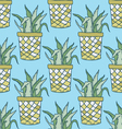 Cute hand drawn terrariums houseplants and cacti vector image