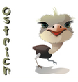 animal Ostrich vector image