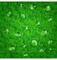 Background with grass and water drops vector image