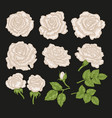 big set with white rose flowers and leaves in vector image