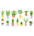 pot plants house tropical leaves tree vector image
