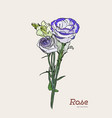 purple and white rose flower set vector image vector image