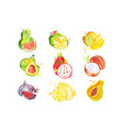 set of tropical colorful watercolor fruits vector image vector image