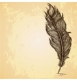 Sketch of the feather on grungy texture vector image vector image