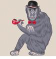 hipster monkey Gentleman vector image