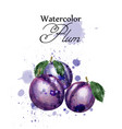 plum watercolor fruits sweet label vector image vector image