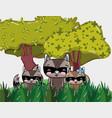 cute raccoons cartoons vector image