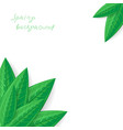 leaves spring corner vector image