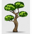 bonsai tree on transparent background vector image vector image