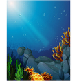Corals and seaweeds under the sea vector image vector image