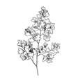 hand drawn maidenhair fern branch vector image