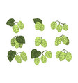hand drawn set of green hop cones branches vector image