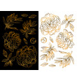 set of hand drawn peony flowers and herbs vintage vector image