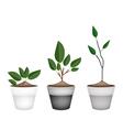 Three Ornamental Trees in Ceramic Flower Pots vector image vector image
