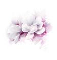 two white beautiful magnolias