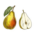 yellow pear with leaf and half fruit vector image