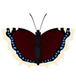 butterfly morning cloak vector image vector image