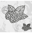 Hand drawn decorative raspberries