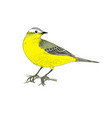 hand drawn yellow wagtail vector image vector image