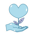 hand with beauty heart plant with leaves design vector image vector image