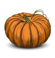 pumpkin vegetable hand drawn vector image vector image