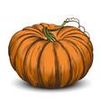 pumpkin vegetable hand drawn vector image