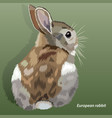 realistic european rabbit isolated vector image vector image