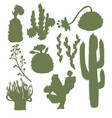 silhouettes cacti with flowers isolated vector image vector image