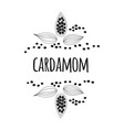 cardamom spice sketch style vector image vector image