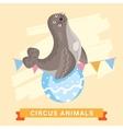 Circus Seals animal series vector image vector image