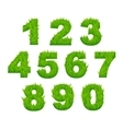 Grass numbers and digits vector image vector image